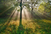 The bright sun rays — Stock Photo