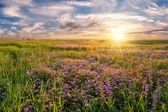 Flower meadow on sunrise — Stock Photo