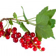 Red currants with leaves — Stock Photo
