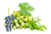 Ripe blue and green grapes — Stock Photo