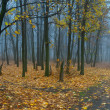 Landscape with fog in forest — Stock Photo #14890257