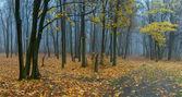 пейзаж с туман в лесу — Стоковое фото