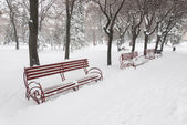 Benches in snow — Stock Photo