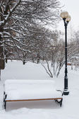 Benches in the winter park — Stock Photo