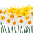 Stock Photo: Bouquet of beautiful narcissus