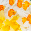Stock Photo: Close up bouquet of narcissus