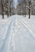 Tire trace on snow in winter park — Stock Photo