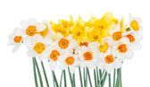 Bouquet of beautiful narcissus — Stock Photo