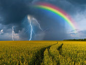 Big wheat field and thunderstorm — Stock Photo