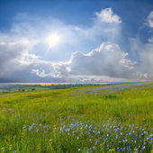 Blue flower meadow and clouds — Stok fotoğraf