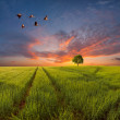 Evening landscape with a green field — Stock Photo