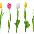 Set of tulips isolated — Stock Photo