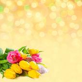 Achtergrond met tulpen — Stockfoto