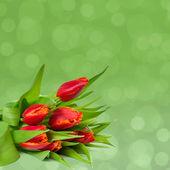 Achtergrond met rode tulpen — Stockfoto