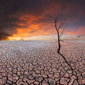 Dry tree on dry earth — Stock Photo