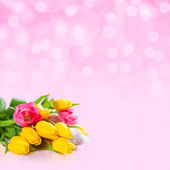Pink background with tulips — Stock Photo