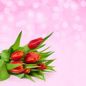 Roze vakantie achtergrond met rode tulpen — Stockfoto
