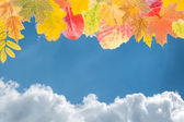 Leaves and clouds against the blue sky — Stock Photo