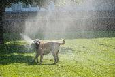 Happy dog play-2 — Stock Photo