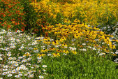 Flowers meadow in park — Stock Photo