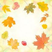 Autumn background 008 — Stock Photo