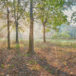 Vintage panorama of the oak wood — Stock Photo