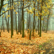 Vintage landscape with fog in forest — Stock Photo #30611309