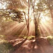 Sun rays landscape — Stock Photo