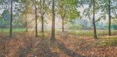 Vintage panorama of the oak wood — Stock Photo
