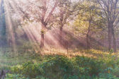 Vintage sun rays in wood — Stock Photo