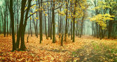 Vintage landscape with fog in forest — Stock Photo