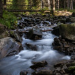 River in the forest — Stock Photo #36563671