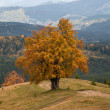 Stock Photo: Lonely autumn tree