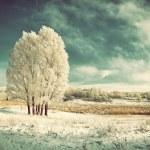 Vintage landscape with frozen tree — Stock Photo #36565951