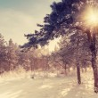 Vintage winter morning — Stock Photo