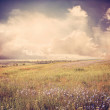 Stock Photo: Blue flower meadow vintage