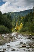 Landscape with a mountain river — Fotografia Stock