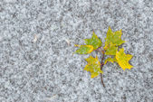 Autumn leaves on snow — Stock Photo