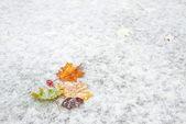 Kar üzerinde sonbahar yaprakları — Stok fotoğraf