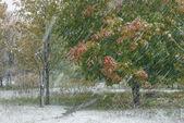 Strong autumn snowfall — Stock Photo