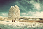 Vintage landscape with frozen tree — Stock Photo