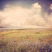 Blue flower meadow vintage — Stock Photo