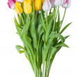 Tulip flower isolated — Stock Photo #38307081