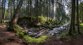 Panorama of a large forest with river — Stock Photo
