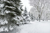 Winter in fores — Stock Photo