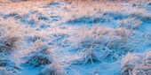冬季草甸 — 图库照片