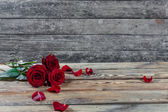 Three red rose flowers — Stock Photo