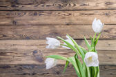 Background with tulip — Stock Photo