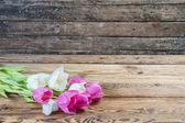Pink and yellow tulip — Stock Photo