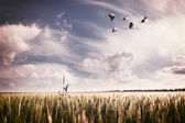 Landscape with a flock of storks — Foto Stock